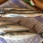 Fisch Gastronomie Dömitz