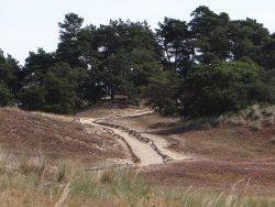 Wanderdüne Klein Schmölen mit Dünenlehrpfad